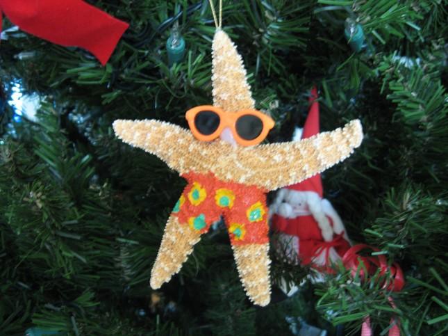 Starfish at the beach