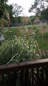 lachance-winery-grasses