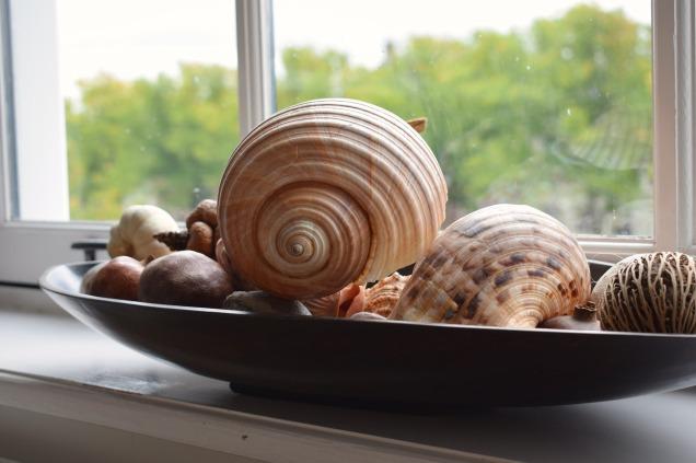 seashell pixabay window